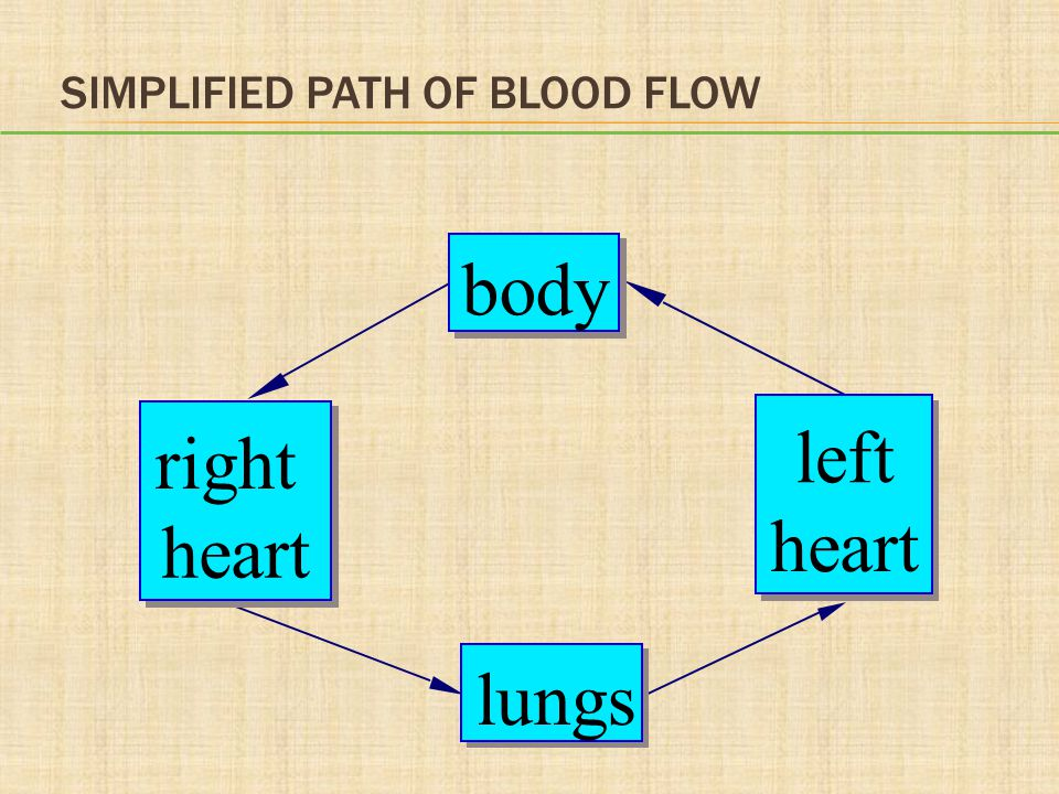 Simplified Path of Blood Flow