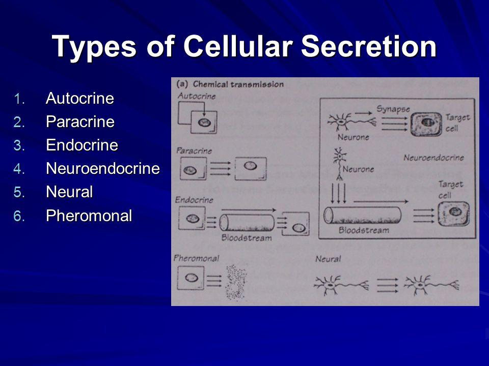 Types of Cellular Secretion