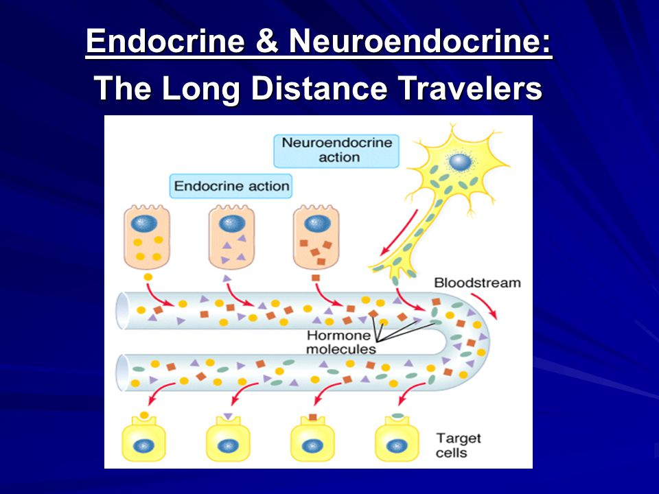 Endocrine & Neuroendocrine: The Long Distance Travelers