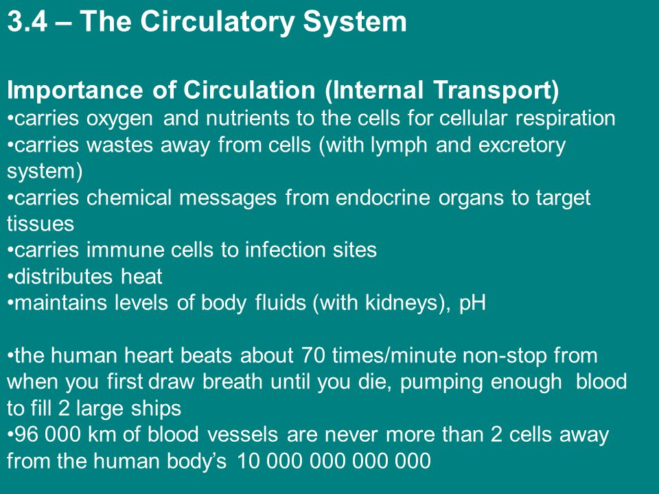 3.4 – The Circulatory System