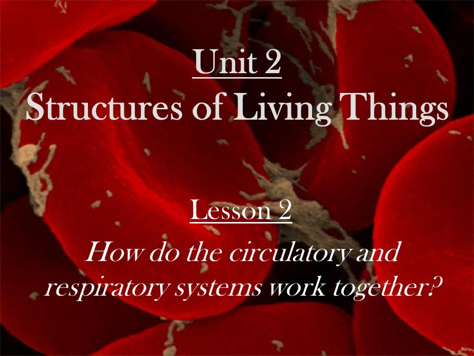 Unit 2 Structures of Living Things