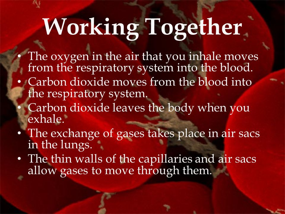 Working Together The oxygen in the air that you inhale moves from the respiratory system into the blood.