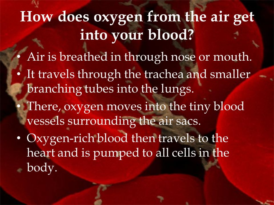 How does oxygen from the air get into your blood
