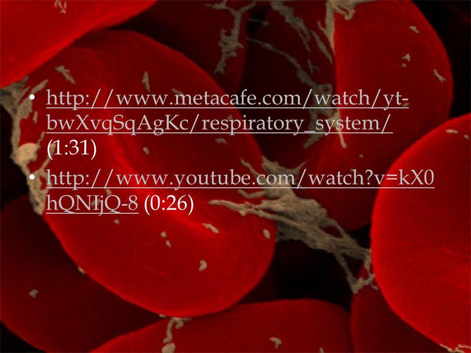 http://www.metacafe.com/watch/yt-bwXvqSqAgKc/respiratory_system/ (1:31)