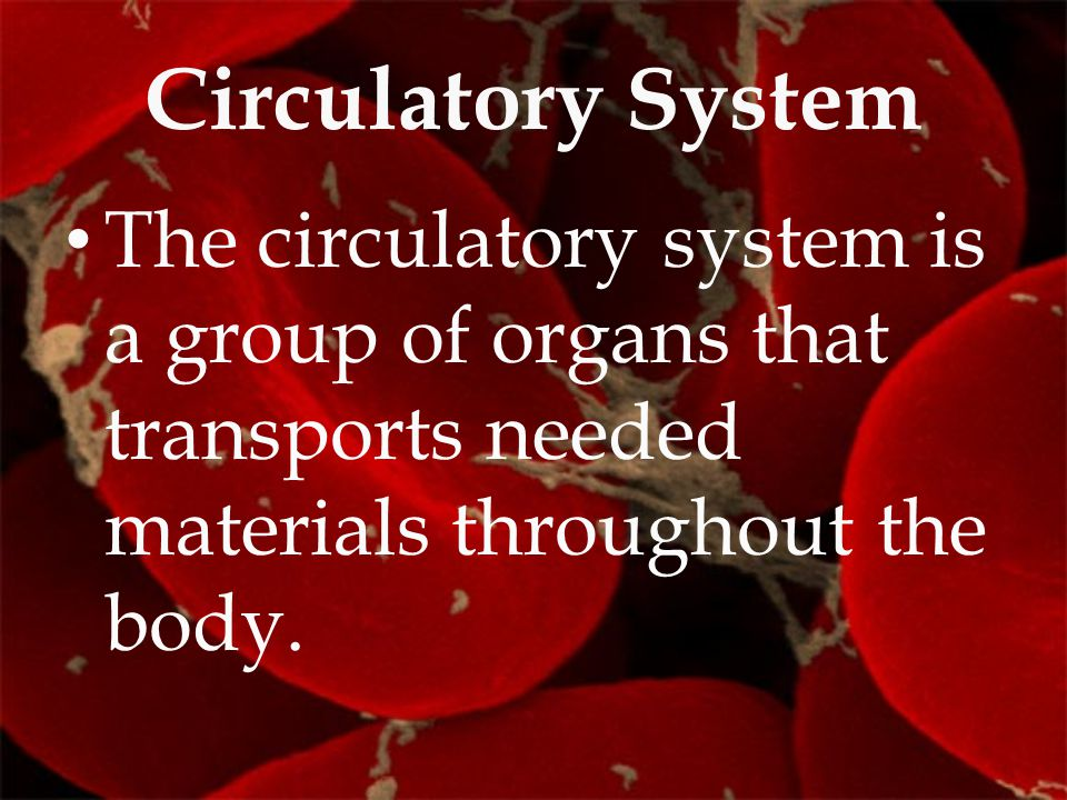 Circulatory System The circulatory system is a group of organs that transports needed materials throughout the body.