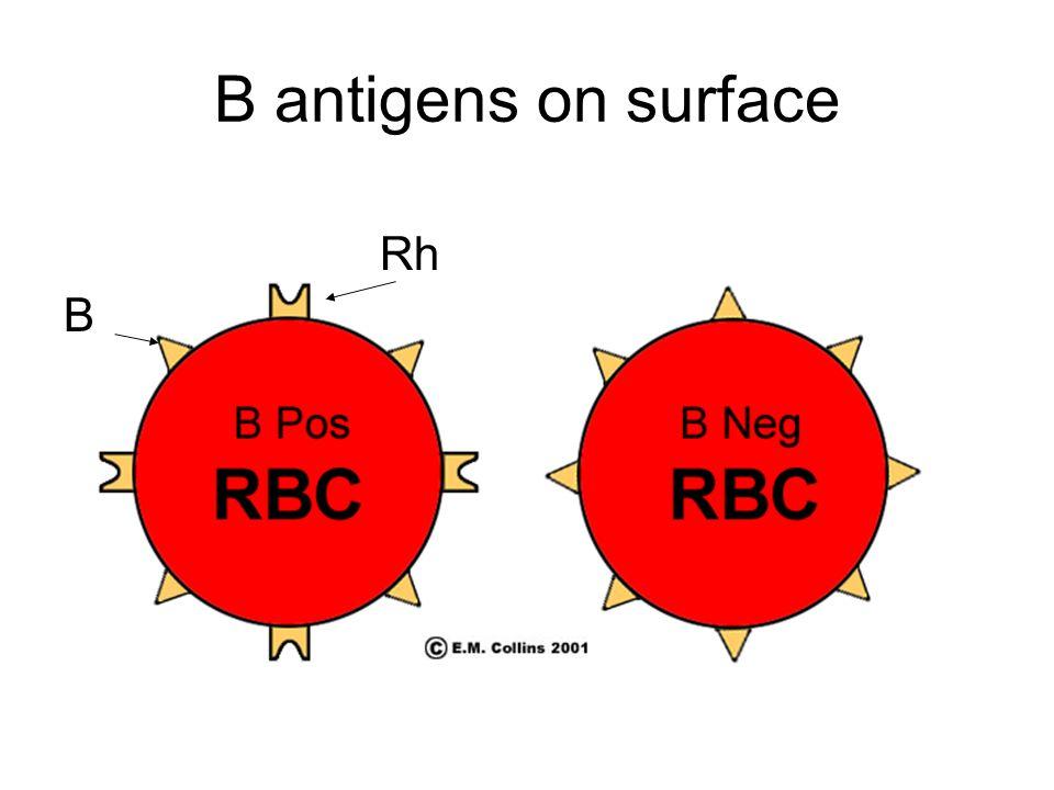 B antigens on surface Rh B