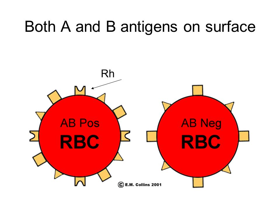 Both A and B antigens on surface