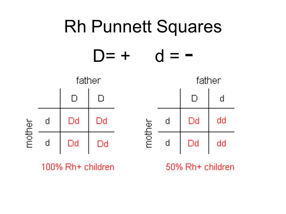 Rh Punnett Squares D= + d = -