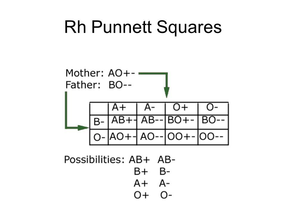 Rh Punnett Squares