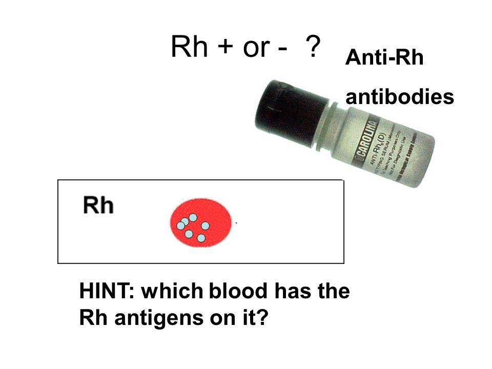 Rh + or - Anti-Rh antibodies