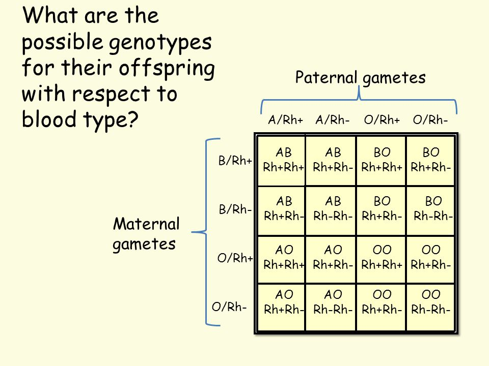 What are the possible genotypes for their offspring with respect to blood type
