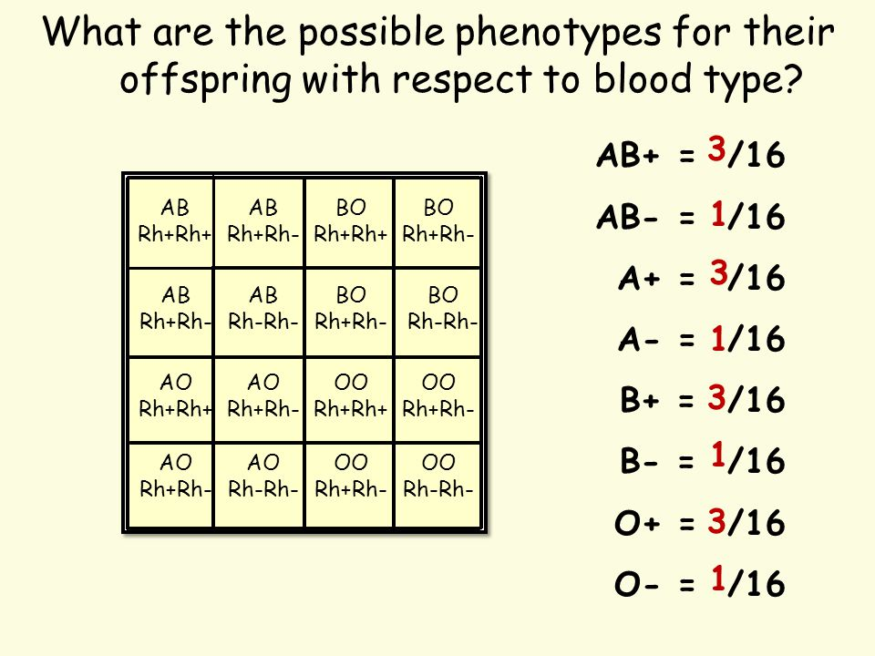 What are the possible phenotypes for their offspring with respect to blood type