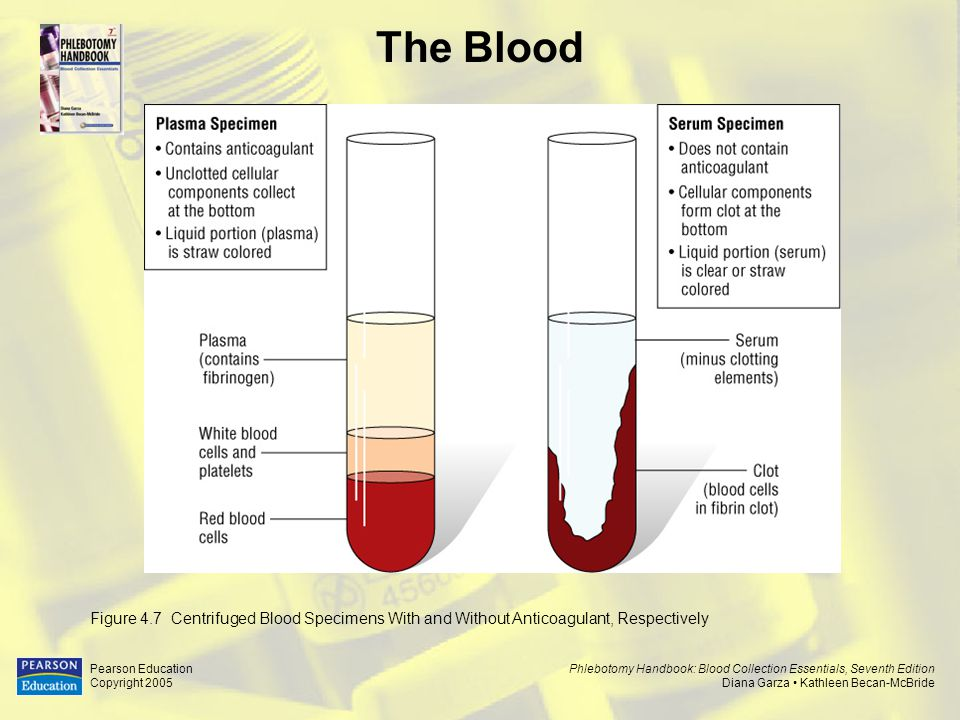 The Blood Figure 4.7 Centrifuged Blood Specimens With and Without Anticoagulant, Respectively. Pearson Education.
