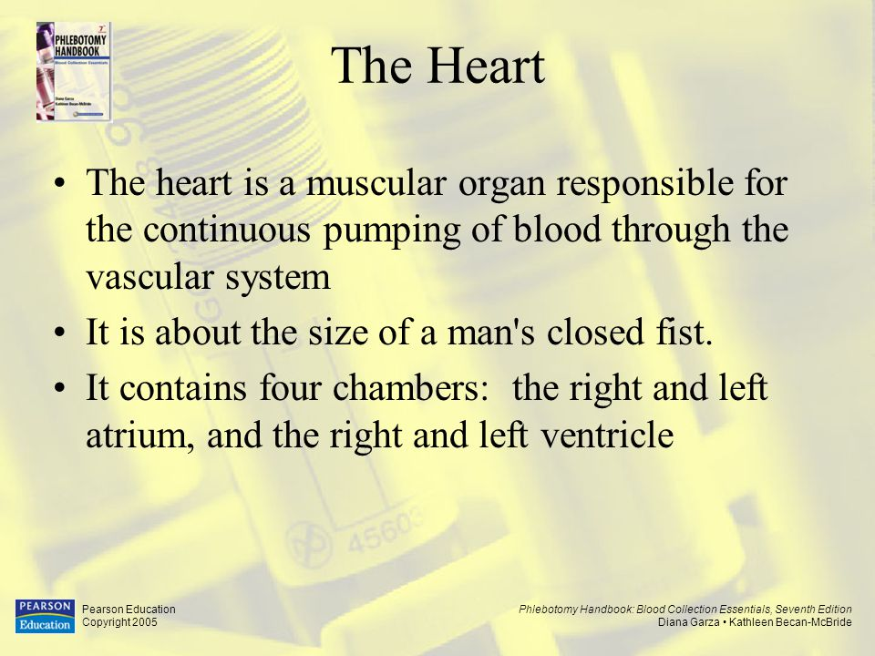 The Heart The heart is a muscular organ responsible for the continuous pumping of blood through the vascular system.