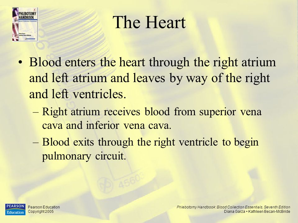 The Heart Blood enters the heart through the right atrium and left atrium and leaves by way of the right and left ventricles.