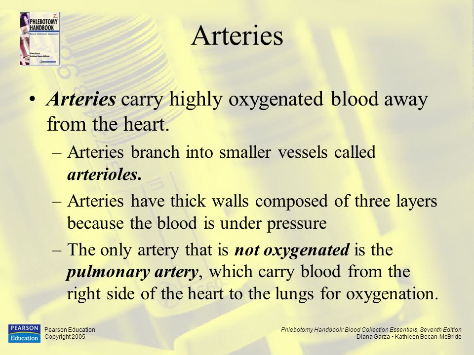 Arteries Arteries carry highly oxygenated blood away from the heart.