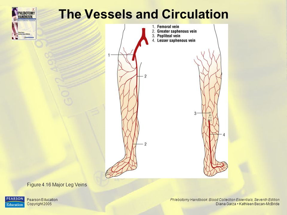 physio ex cardiovascular dynamics Solved by ramonistry exercise 5: cardiovascular dynamics: activity 3: studying the effect of blood vessel length on by ramonistry.