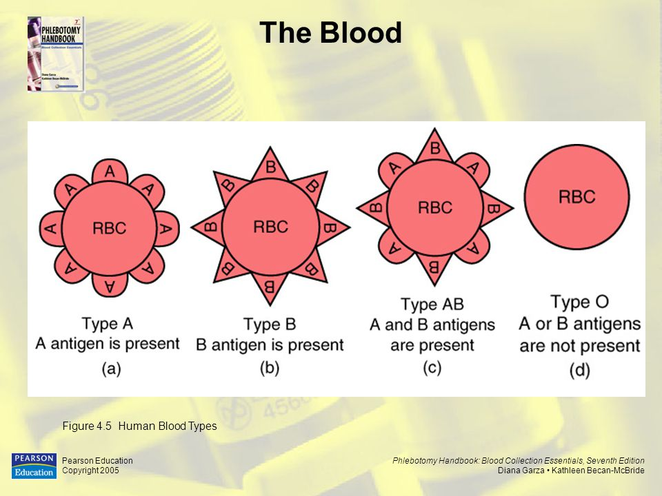 The Blood Figure 4.5 Human Blood Types Pearson Education