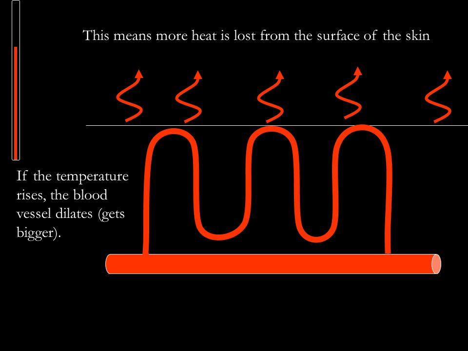 This means more heat is lost from the surface of the skin