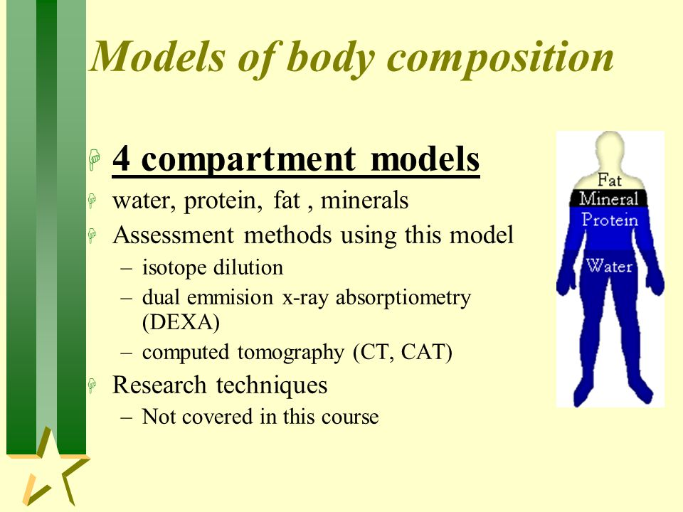 Models of body composition