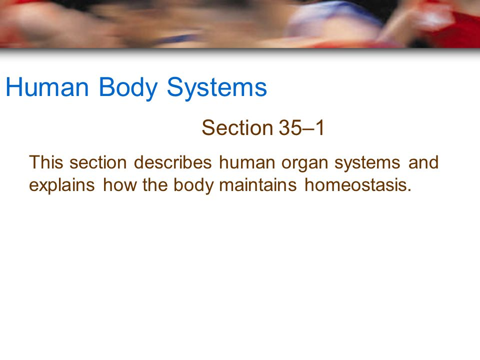 Human Body Systems Section 35–1