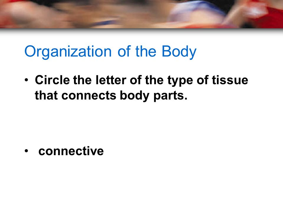 Organization of the Body