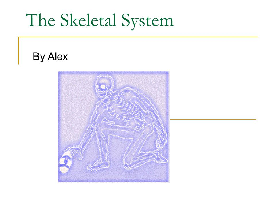 The Skeletal System By Alex