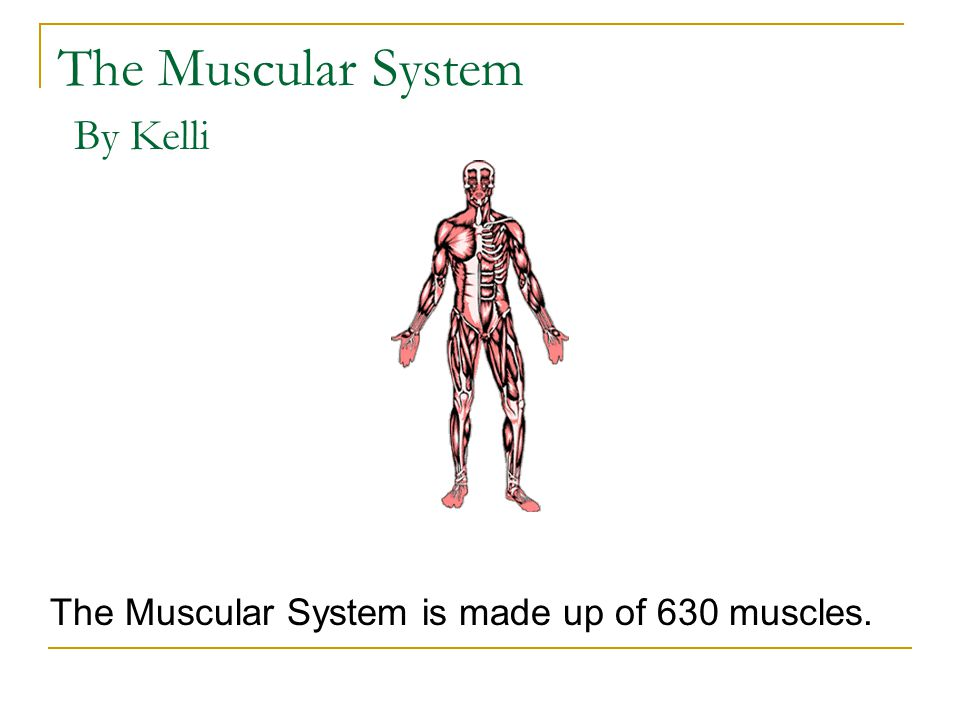 The Muscular System is made up of 630 muscles.