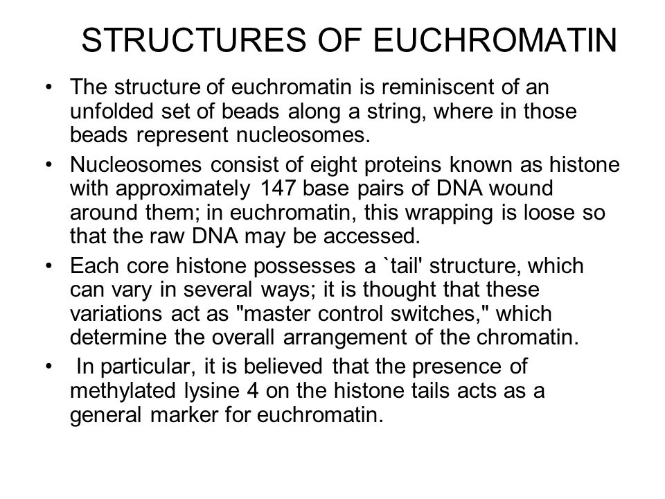 STRUCTURES OF EUCHROMATIN