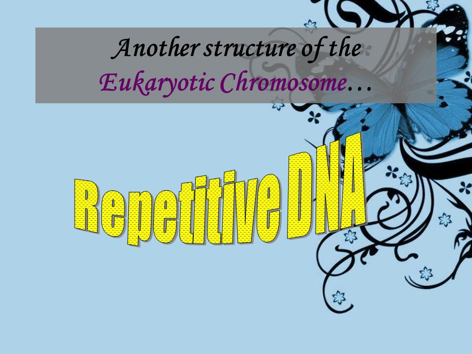 Another structure of the Eukaryotic Chromosome…