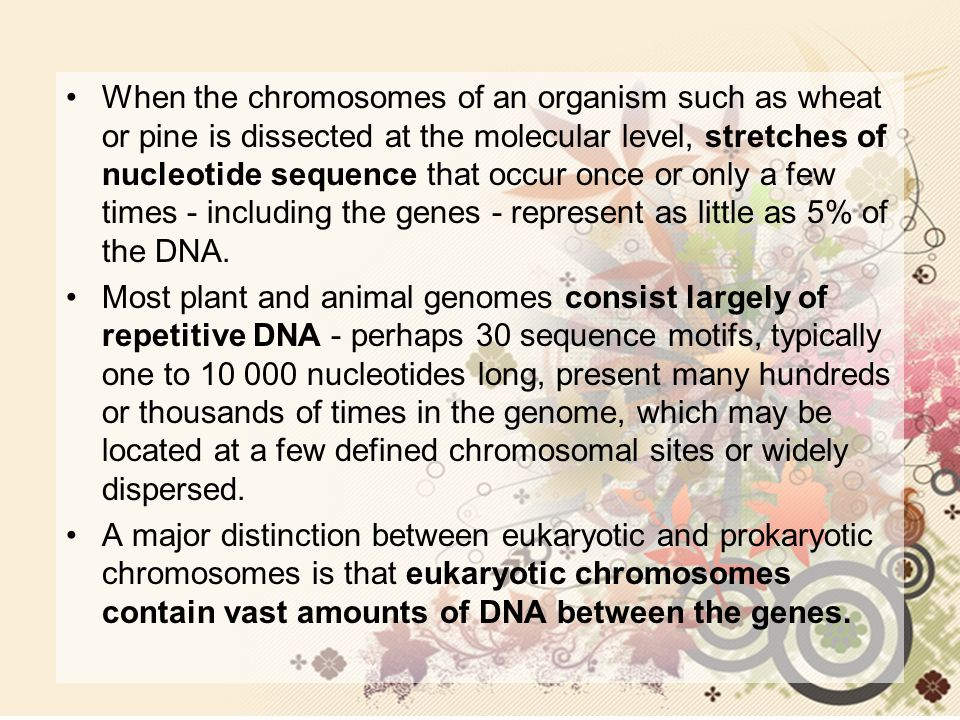 When the chromosomes of an organism such as wheat or pine is dissected at the molecular level, stretches of nucleotide sequence that occur once or only a few times - including the genes - represent as little as 5% of the DNA.