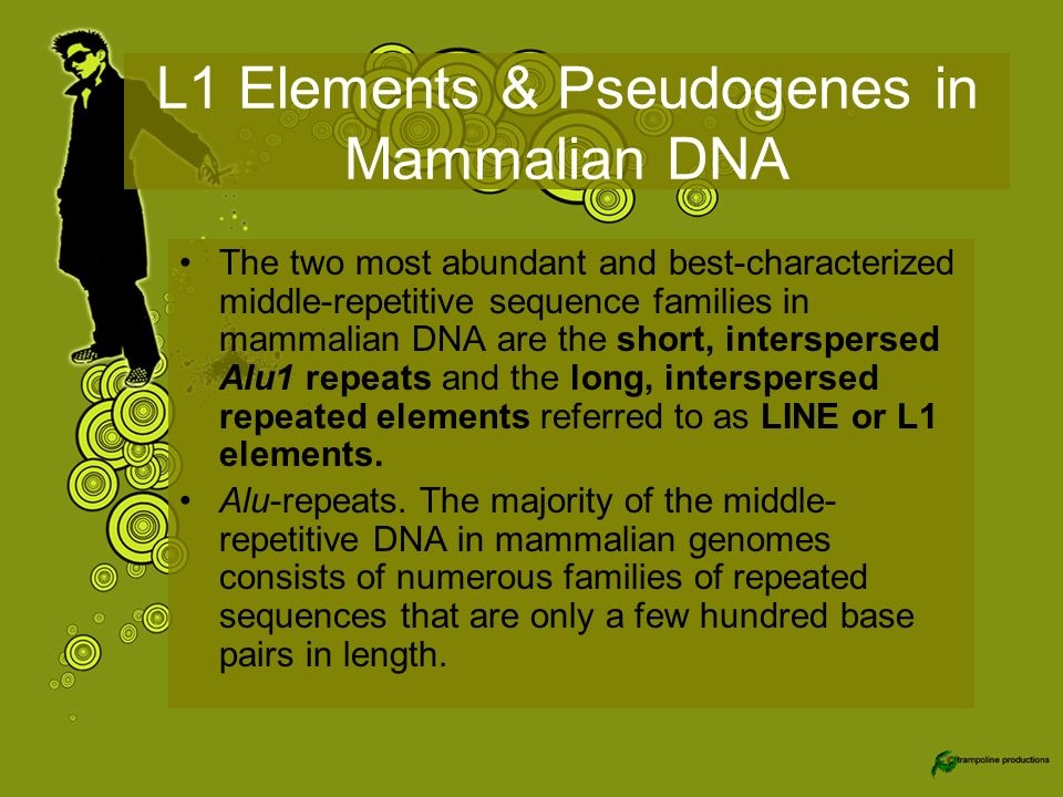 L1 Elements & Pseudogenes in Mammalian DNA