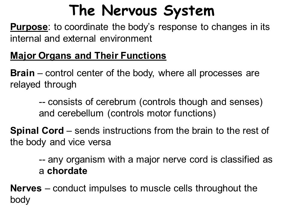 The Nervous System Purpose: to coordinate the body's response to changes in its internal and external environment.
