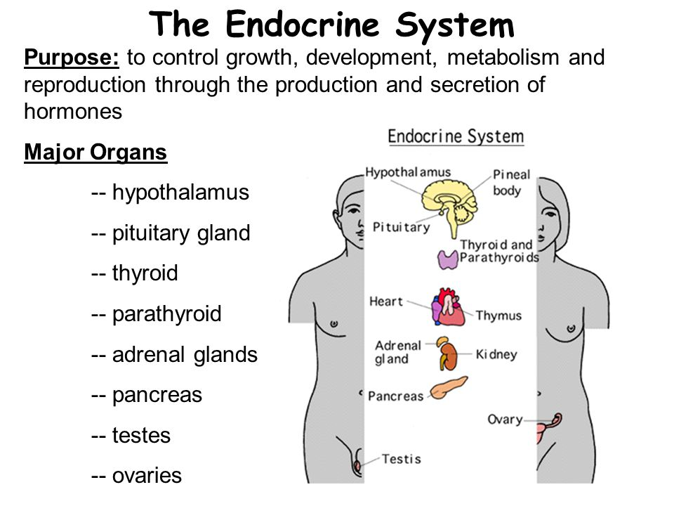 The Endocrine System Purpose: to control growth, development, metabolism and reproduction through the production and secretion of hormones.