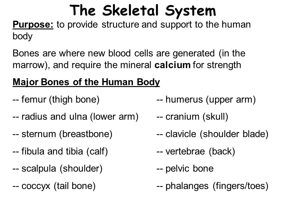 The Skeletal System Purpose: to provide structure and support to the human body.
