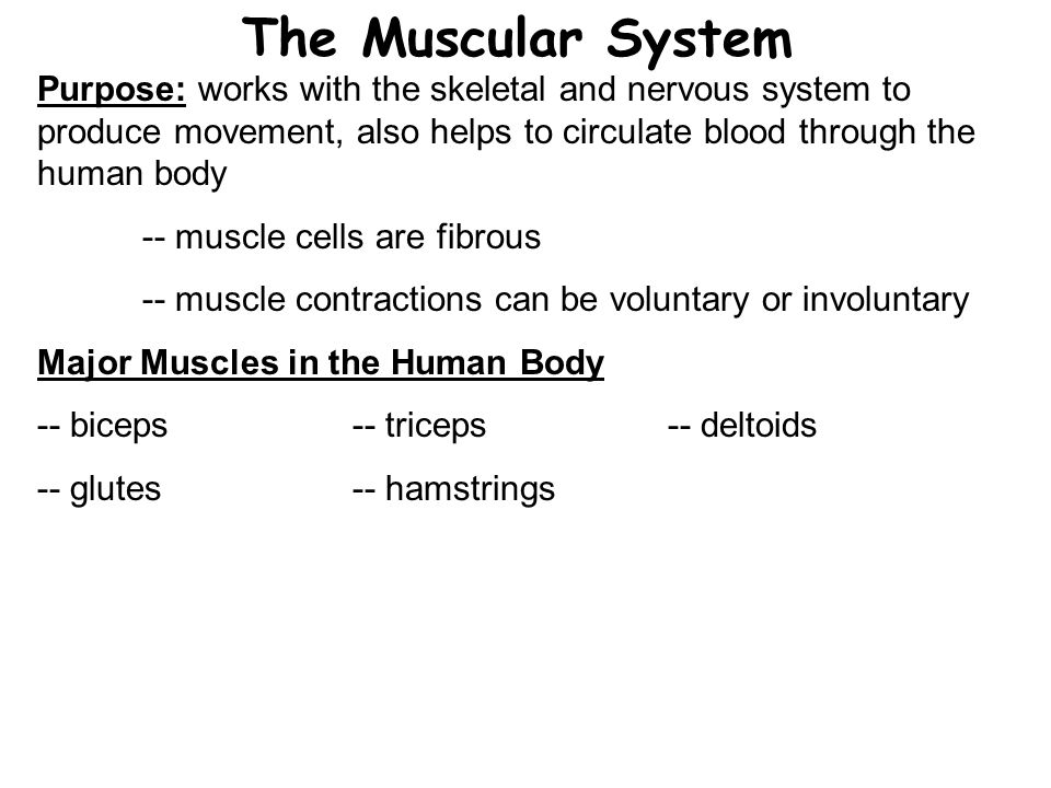 The Muscular System Purpose: works with the skeletal and nervous system to produce movement, also helps to circulate blood through the human body.