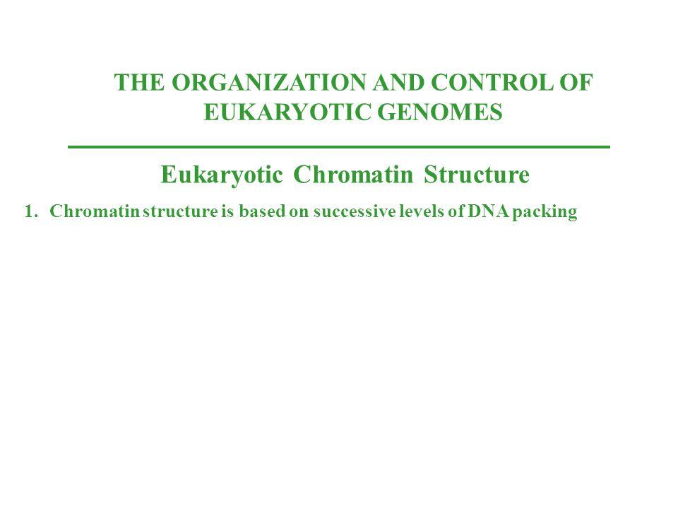 Eukaryotic Chromatin Structure