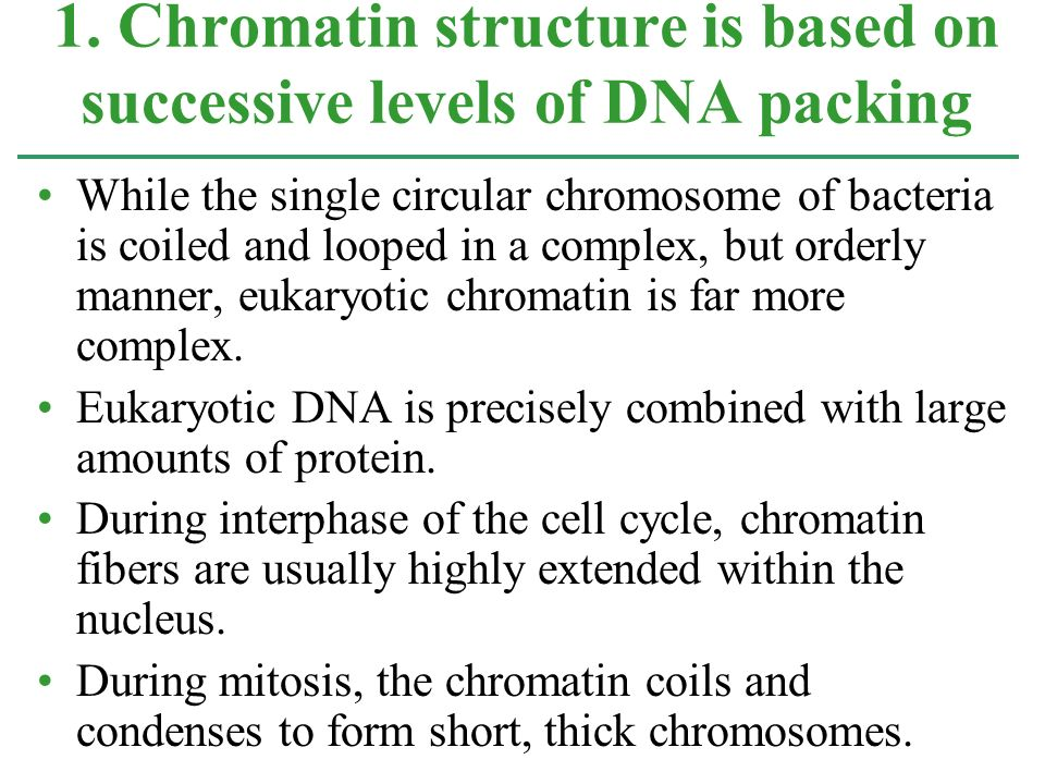 1. Chromatin structure is based on successive levels of DNA packing