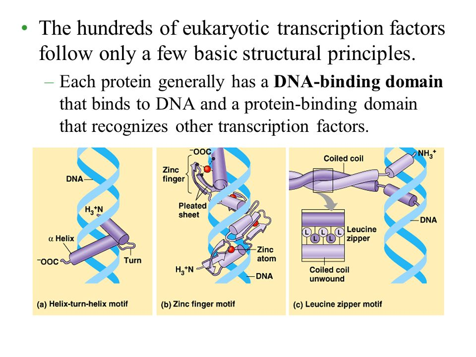 The hundreds of eukaryotic transcription factors follow only a few basic structural principles.