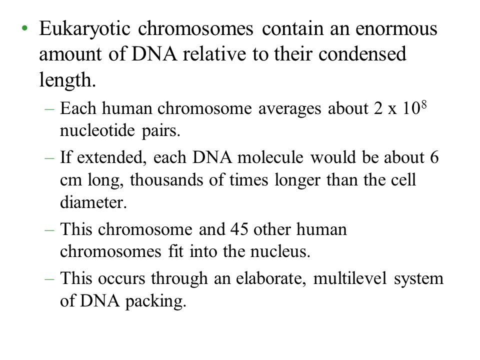 Eukaryotic chromosomes contain an enormous amount of DNA relative to their condensed length.