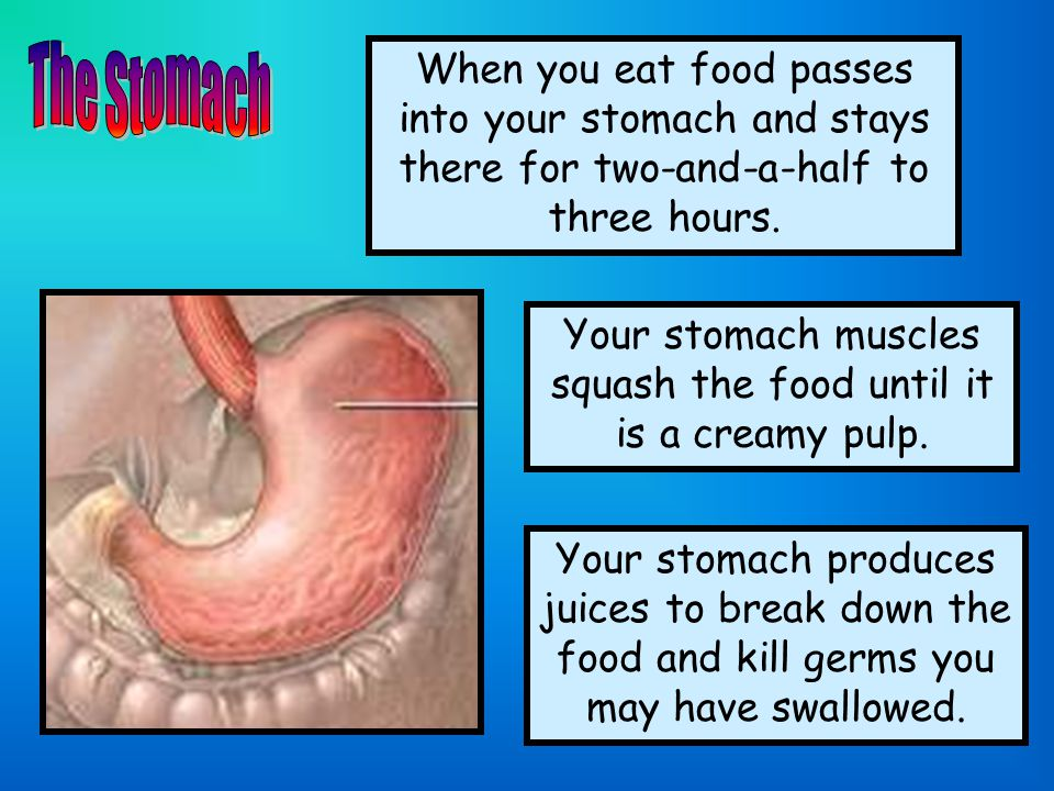 Your stomach muscles squash the food until it is a creamy pulp.