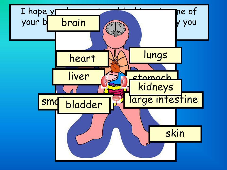 brain lungs heart liver stomach kidneys large intestine
