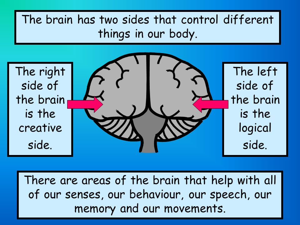The brain has two sides that control different things in our body.