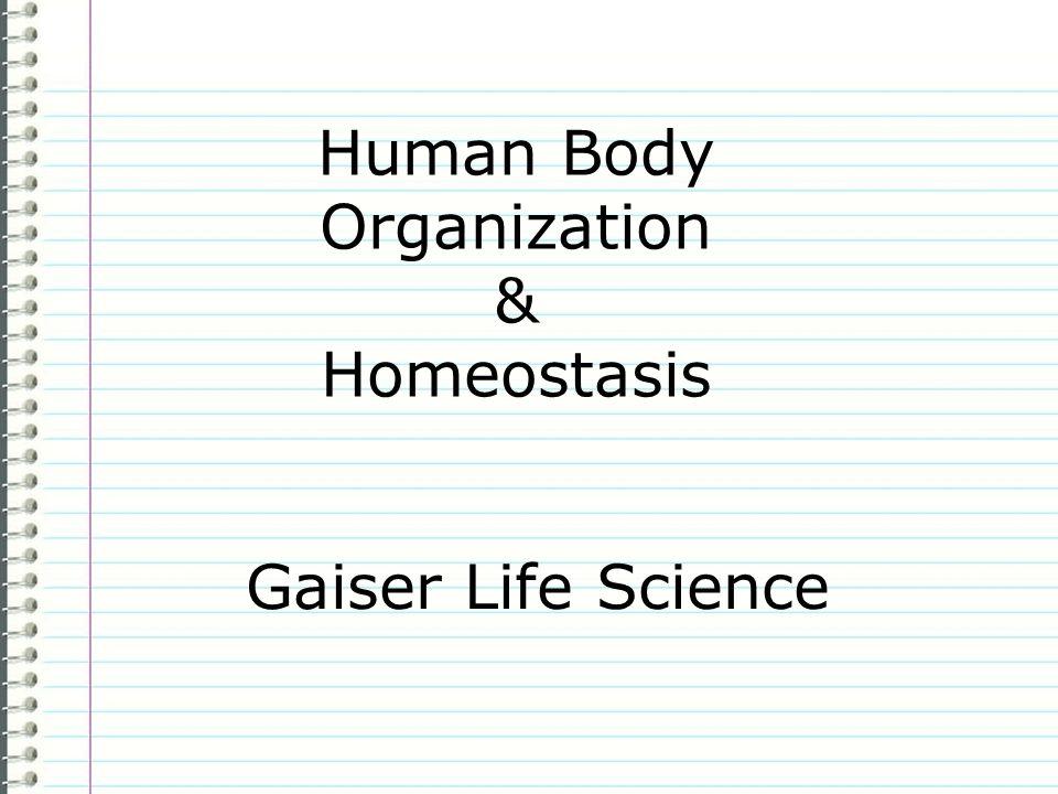 Human Body Organization & Homeostasis