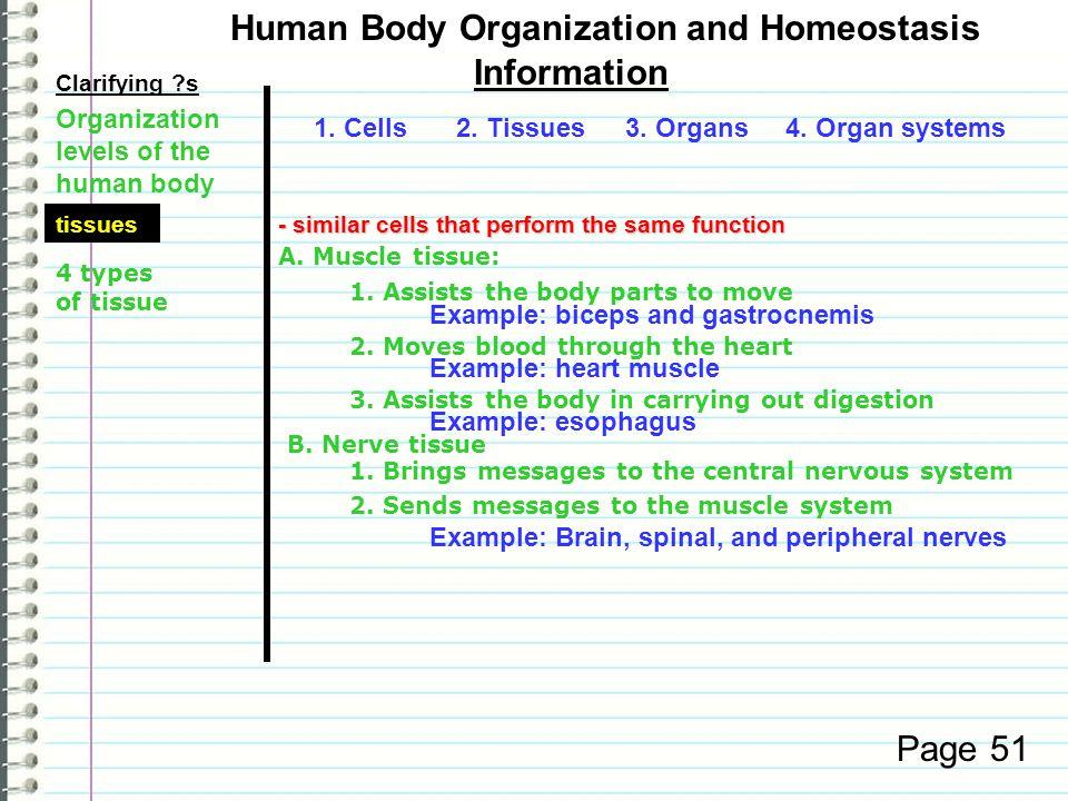 Human Body Organization and Homeostasis