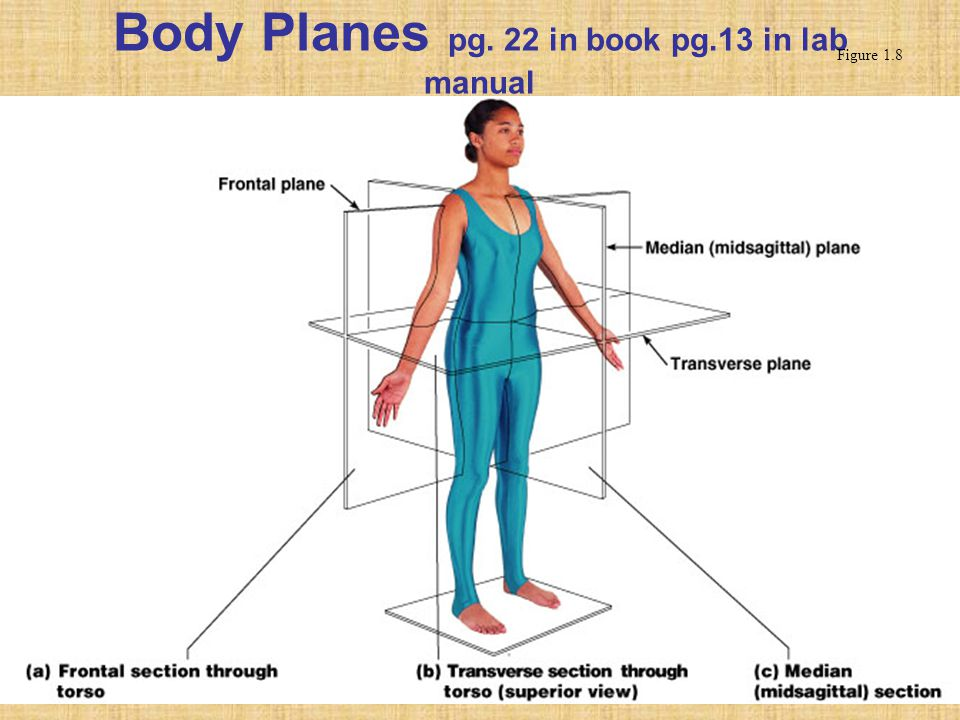 Body Planes pg. 22 in book pg.13 in lab manual