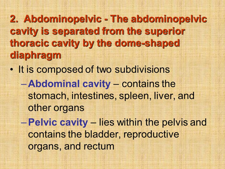 2. Abdominopelvic - The abdominopelvic cavity is separated from the superior thoracic cavity by the dome-shaped diaphragm