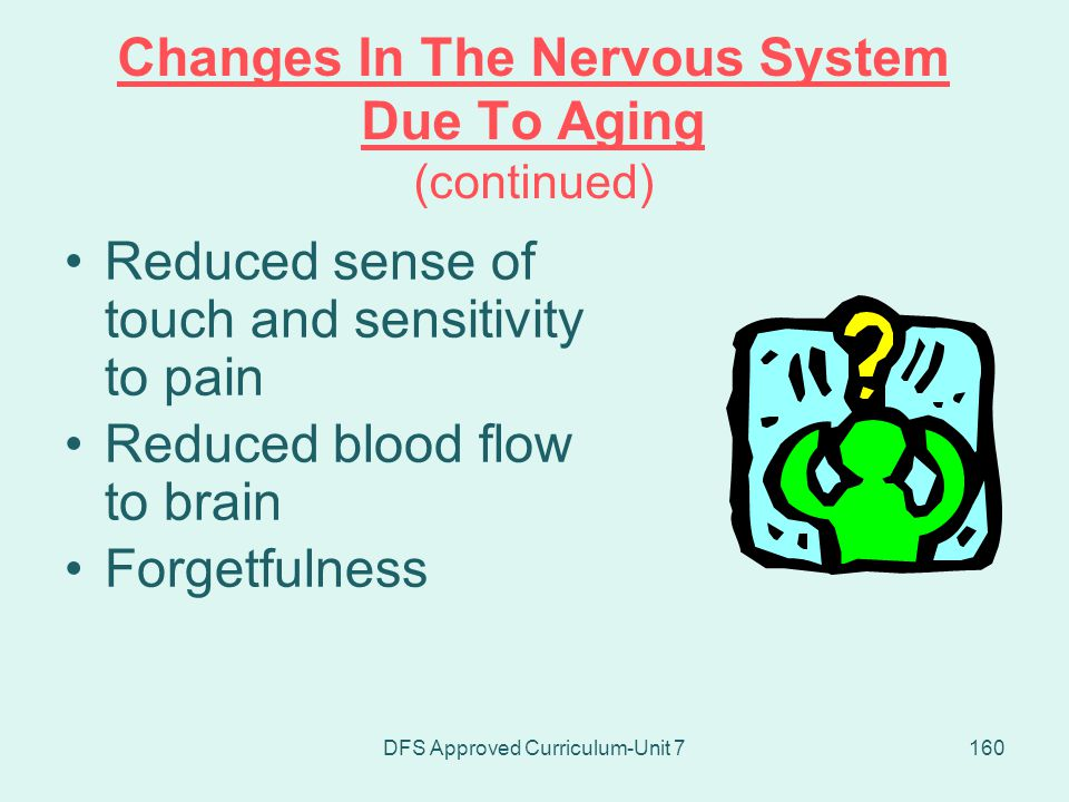 Changes In The Nervous System Due To Aging (continued)