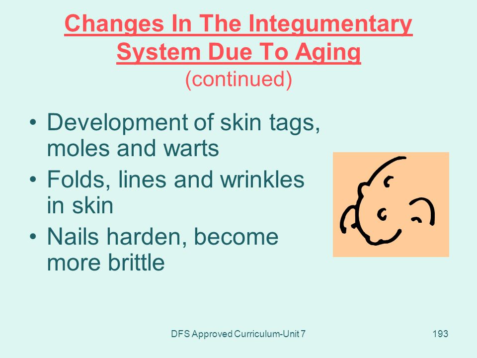 Changes In The Integumentary System Due To Aging (continued)