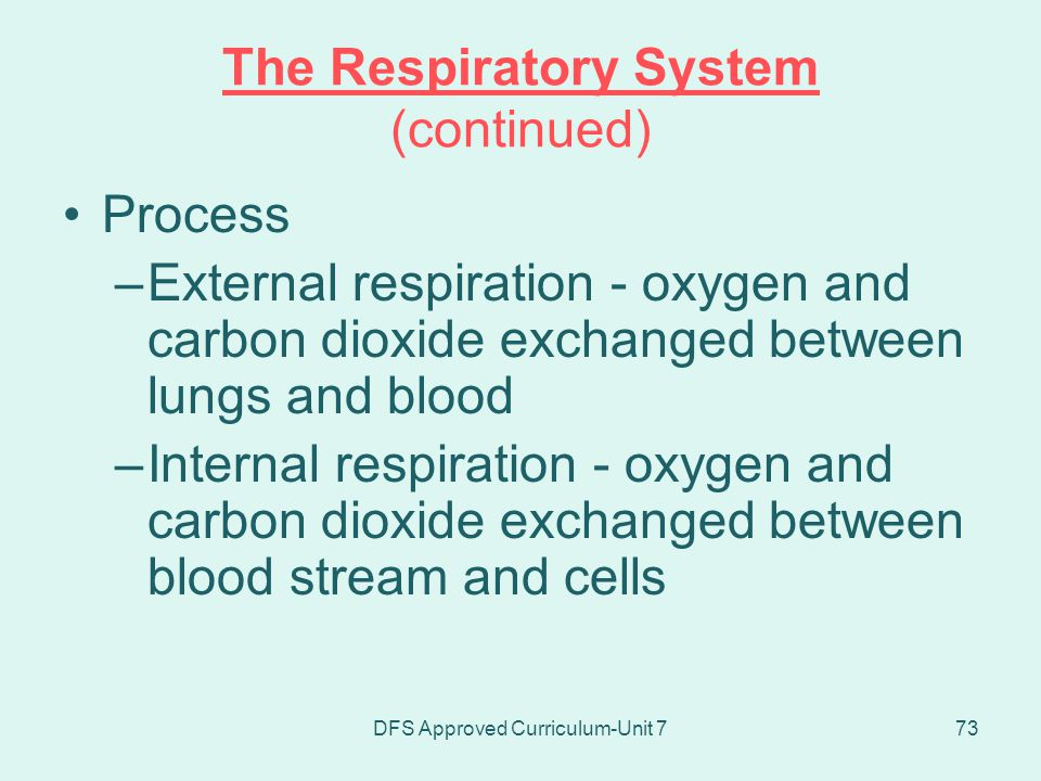 The Respiratory System (continued)